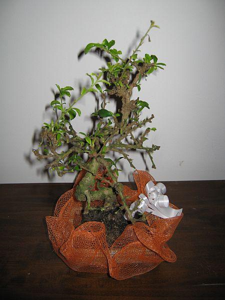bonsaiu-lu-calin01